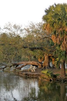 New Orleans City Park is one of America's oldest urban parks.