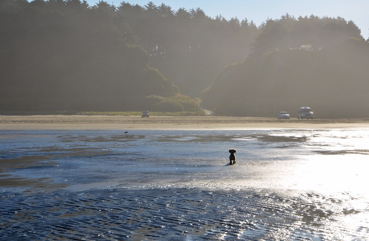 17 Best Images About Pacific Beach Wa Home Of Sand Dollar