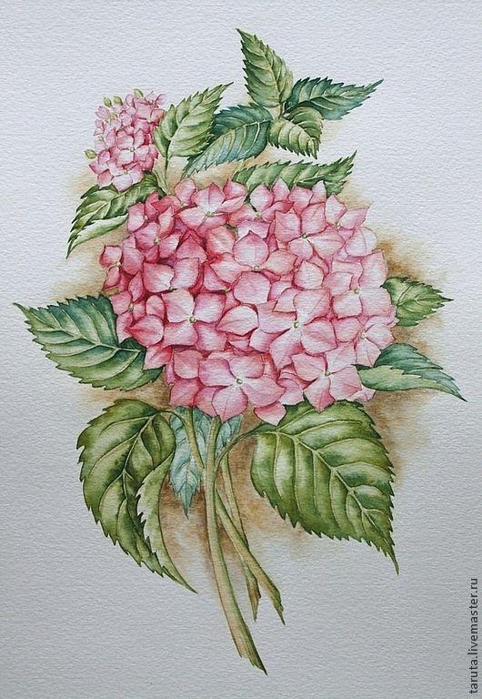 """Купить Рисунок """"Розовая гортензия"""" акварель - гортензия, розовая гортензия, розовые цветы, рисунок гортензии"""