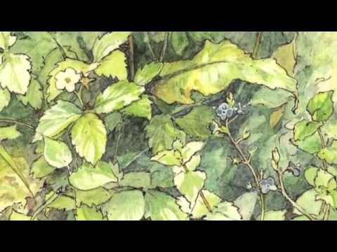 Il piccolo re dei fiori di Kveta Pacovska Nord Sud edizioni videolettura R. Gris mus. G. Allevi - YouTube