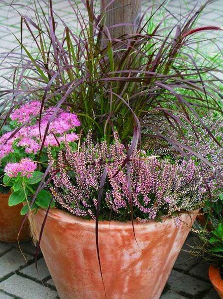 Heidekraut (Erica), Herbst-Fetthenne (Sedum) und Lampenputzergras (Pennisetum rubrum)