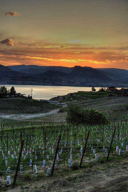 Naramata Road Vineyards, Okanagan Lake, BC, Canada