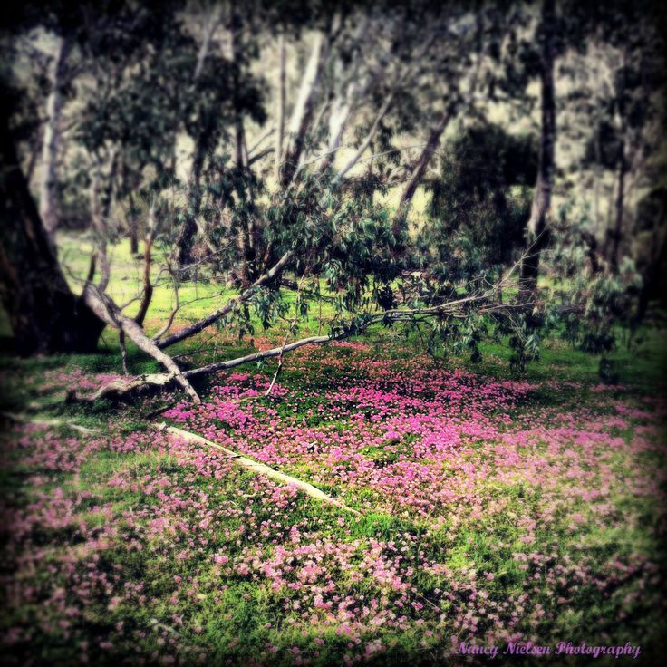 Natures Beauty. Western Australia.   All images are copyright - Nancy Nielsen Photography www.facebook.com/nancynielsenphotography
