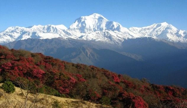 This short trek is easy yet provides outstanding views of Annapurna and Dhaulagiri mountain ranges. With the Gurung Villages in between the path this trial equally helps to know their unique culture and traditions. - See more at: https://www.lifehimalayatrekking.com/ghorepani-poonhill-trekking  #GhorepaniPoonHillTrekking #AnnapurnaPanoramatrekking #Annapurna foothill hiking #annapurnaHikingTour