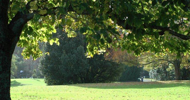 17 mejores ideas sobre rboles peque os en pinterest for Arboles jardin pequeno