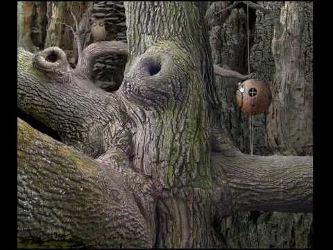 Samorost 1 Walk through - YouTube