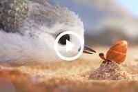 Wanneer Pixar een nieuwe film in de bioscoop uitbrengt, wordt er voorafgaande aan de hoofdfilm een korte animatieiflm. Bij de laatst gelanceerde Pixar-titel, Finding Dory, verscheen de animatiefilm Piper en deze is nu online verschenen. De film duurt een kleine 6 minuten en is werkelijk waar een genot om naar te kijken. We zullen niks verklappen en raden gewoon aan om te gaan kijken!
