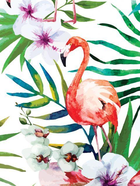 Tropical Flamingo                                                                                                                                                                                 Mais