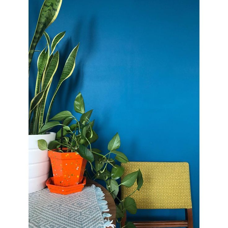 This shade of blue paint makes my apartment feel like a permanent vacation - Curbed