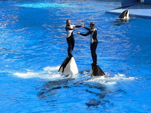 San Diego Bus Tours and Vacation Packages Sea World California Los Angeles #car #insurance #in #san #diego #ca, #san #diego #bus #tours #things #to #do #city #pass #tours #vacation #packages #los #angeles #san #francisco #sightseeing #sea #world #las #vegas #grand #canyon #yosemite http://liberia.remmont.com/san-diego-bus-tours-and-vacation-packages-sea-world-california-los-angeles-car-insurance-in-san-diego-ca-san-diego-bus-tours-things-to-do-city-pass-tours-vacation-packages-los-ang/  #…