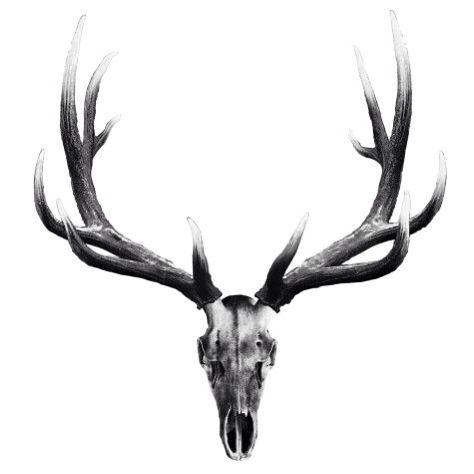 best 25 elk tattoo ideas on pinterest geometric elk tattoo deer head tattoo and antler tattoos. Black Bedroom Furniture Sets. Home Design Ideas