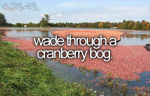 wade through a cranberry bog.