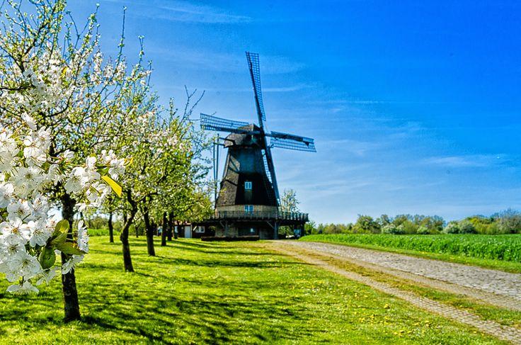 Die Hollicher Mühle im Frühling
