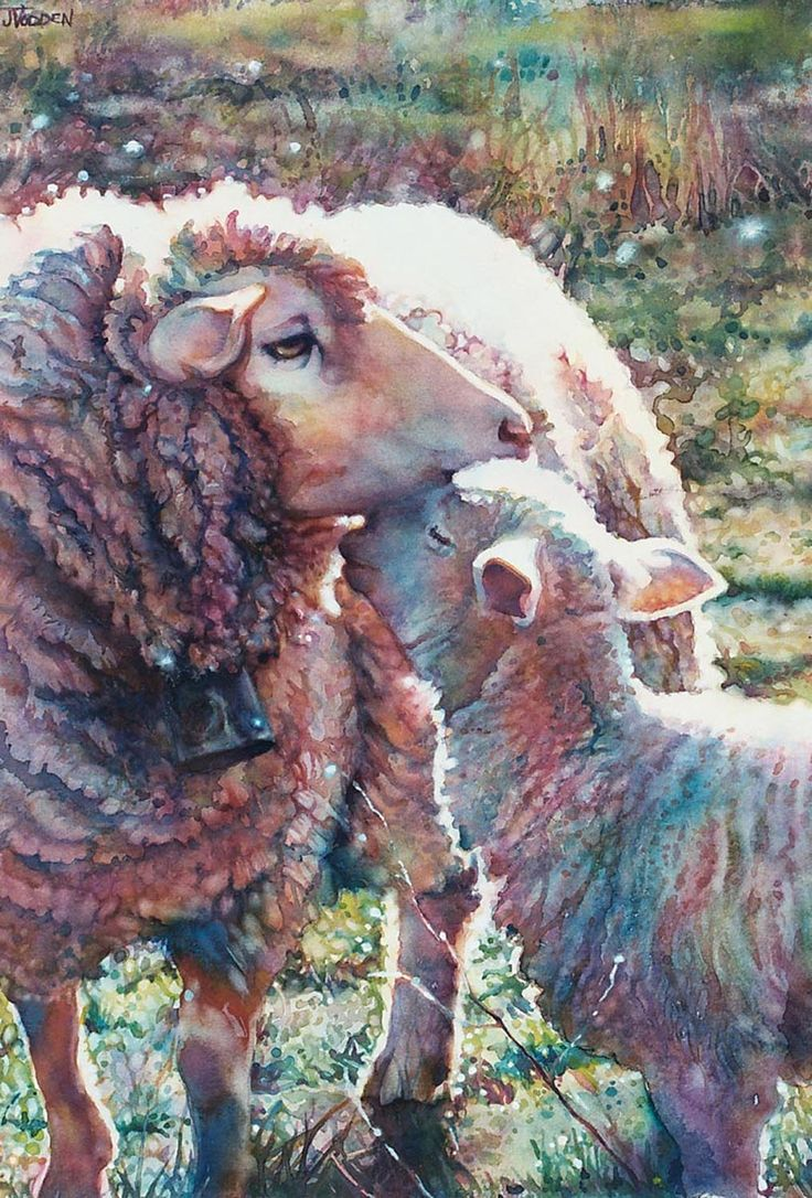 Wonderful colouring. Sheep From Jeannie Vodden art