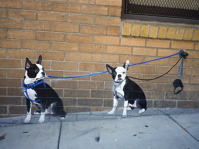 boston terrier street art: Boston Terrier S, Art Wow, Terrier Mural Awesome, Art Can, Artsy, Boston Terrier Dogs, Mural Boston Terriers
