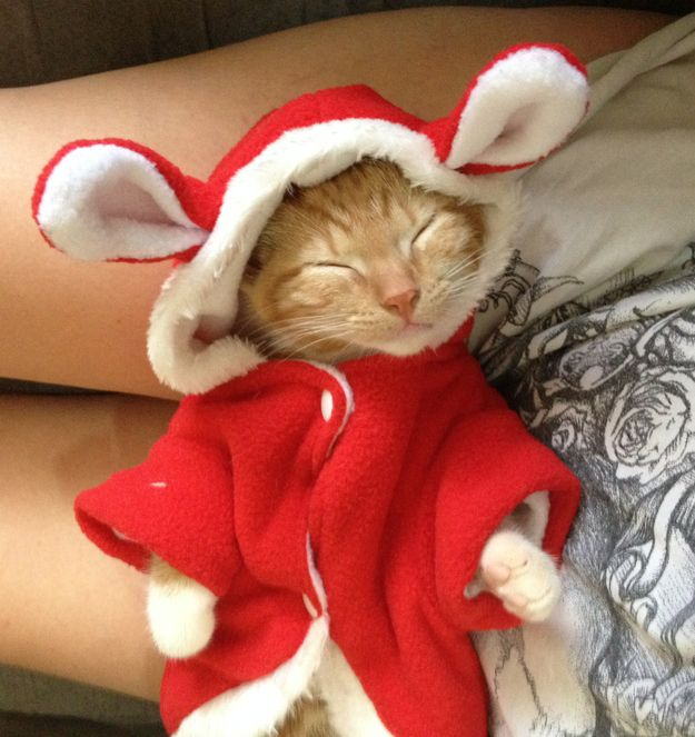 This kitten could not look any warmer, happier, cuter. | 27 Tiny Animals That Will Warm Your Heart Today