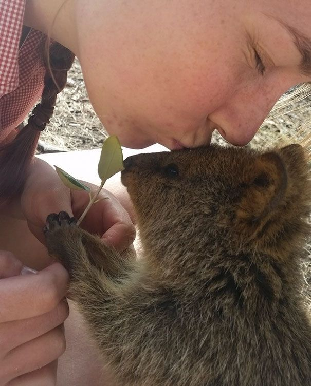 Best Quokkas Images On Pinterest Happy Animals Be Beautiful - 15 photos that prove quokkas are the happiest animals in the world