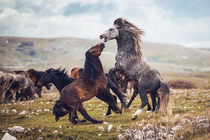 Breathtaking Photos of Wild Horses