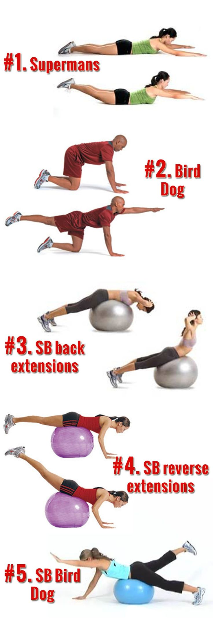 Back exercise lower physical therapy - Lower Back Exercises Home Lower Back Workout Back Extensions Bird Dog Exercise