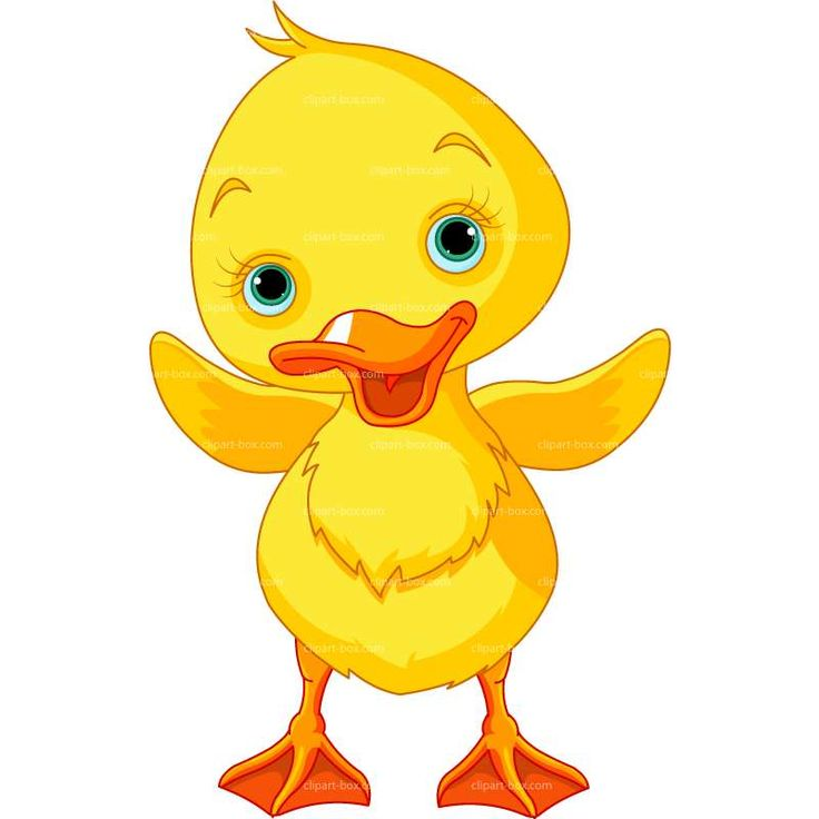CLIPART BABY DUCK | Royalty free vector design