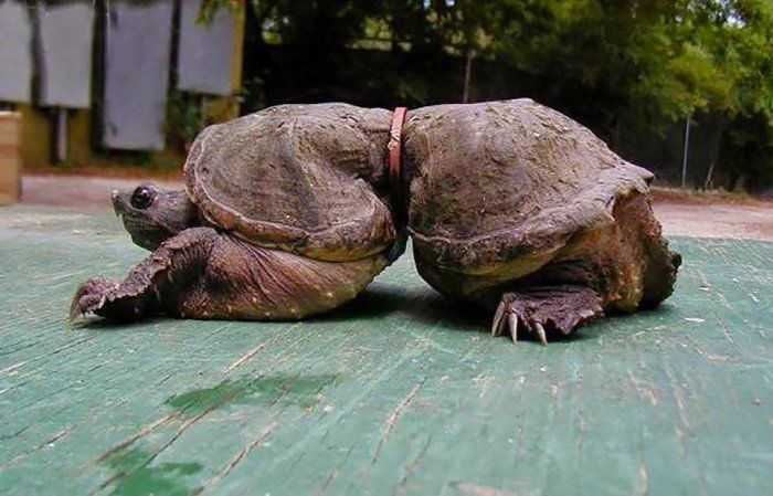 After You See These Disturbing Photos You Will Want To Recycle Everything! (13 Pics)