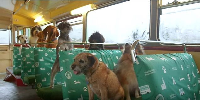 If you are traveling in Europe with your dogs here is a tour for them