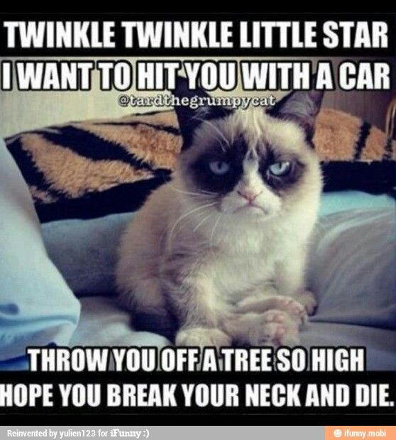 Grumpy Cat you are a hoot