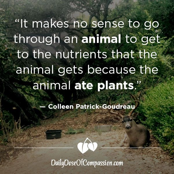 """""""It makes no sense to go through an animal to get to the nutrients that the animal gets because the animal ate plants."""" -Colleen Patrick-Goudreau"""
