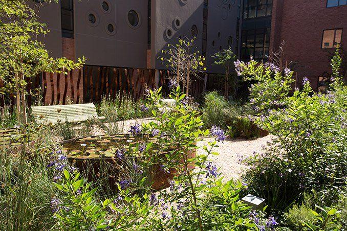 The Landscape Spaces of Nelson Mandela Children's Hospital – World Landscape Architecture