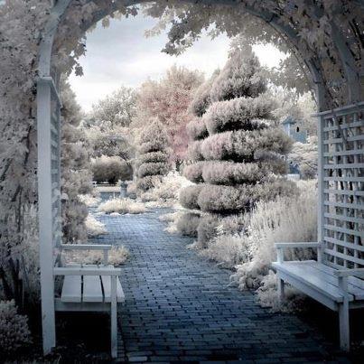 enter wonderland