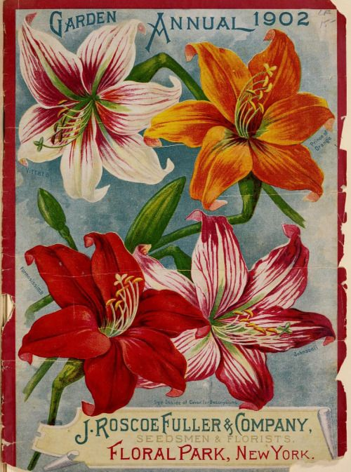 Garden Annual (1902) with an illustration of Amaryllis. J. Roscoe Fuller &…