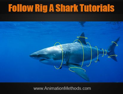 Rig a Shark YouTube videos series