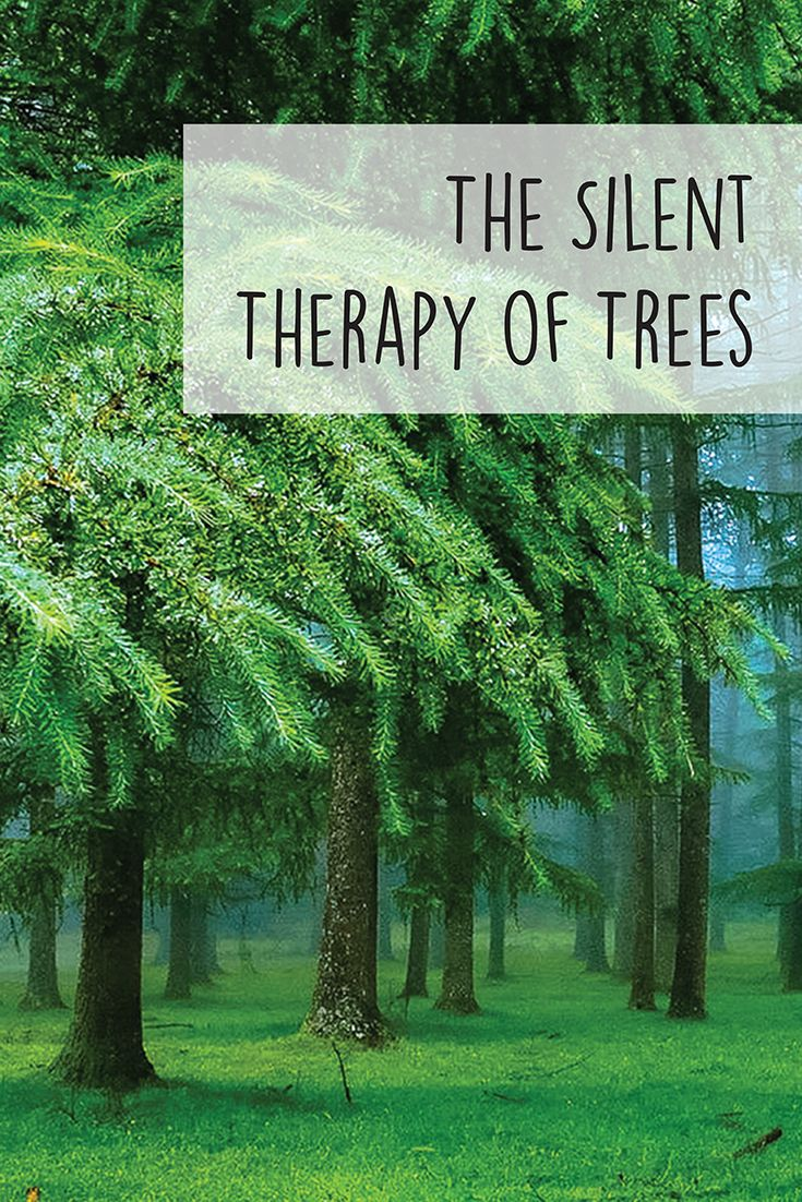 The Silent Therapy of Trees. A guest at Amanvana shares her experience of living close to the resort's incredible flora.  Read More: http://blog.amanvanaspa.com/the-silent-therapy-of-trees  #flora #coorgresort #holidayresort
