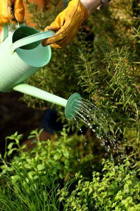 Zakładamy ogródek ziołowy - porady Leroy Merlin