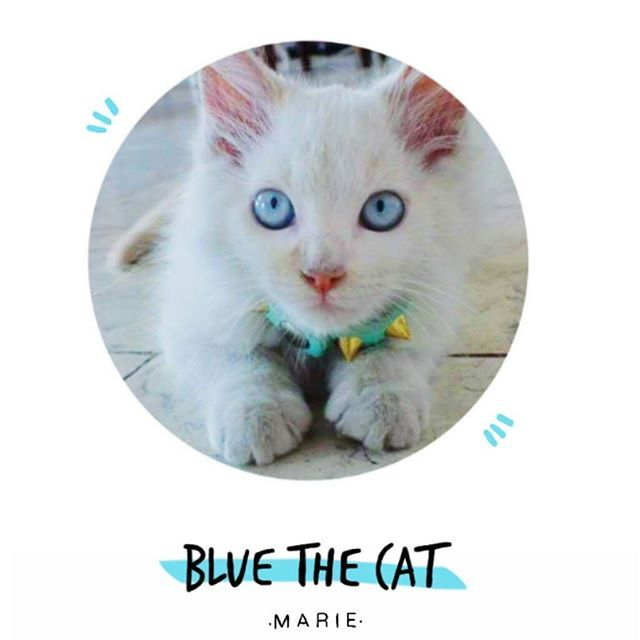 Blue the cat ♥♥♥ . since my last post , I have decided to share with you guys this photo .  #bluethecat #meow #marieilustracion #blue #vsco #mycat #instacat
