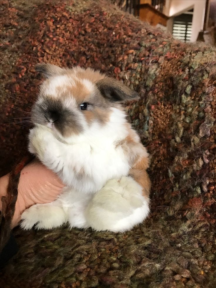 Babies that are born to potty training mothers,are cleaner than ones born in wire cages. #bunny #bunnies