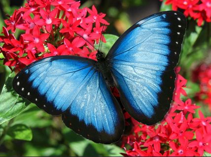 Butterfly World – A Magical Park. Come visit the Tropical Rain Forest Aviary, Grace Gardens, Jewels of the Sky, Wings of the World Secret Garden, and other areas. You will simply love it. Helena.Grossberg@yahoo.com (954) 809.5318 Broker Assoc./Realtor® BHHS – ALM