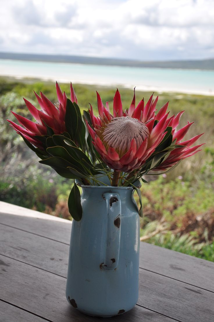 Churchaven South Africa, Proteas