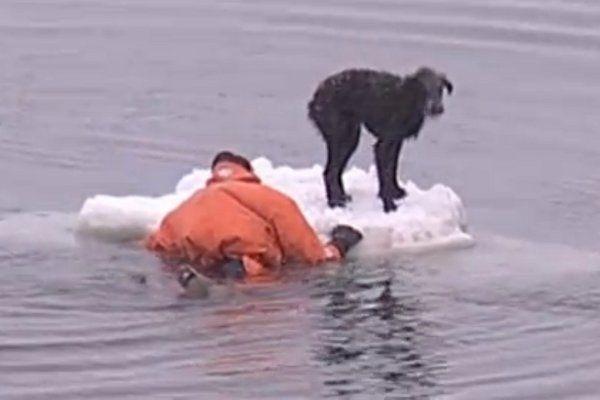 شاهد.. بحار روسي يتحدى الجليد لإنقاذ كلب