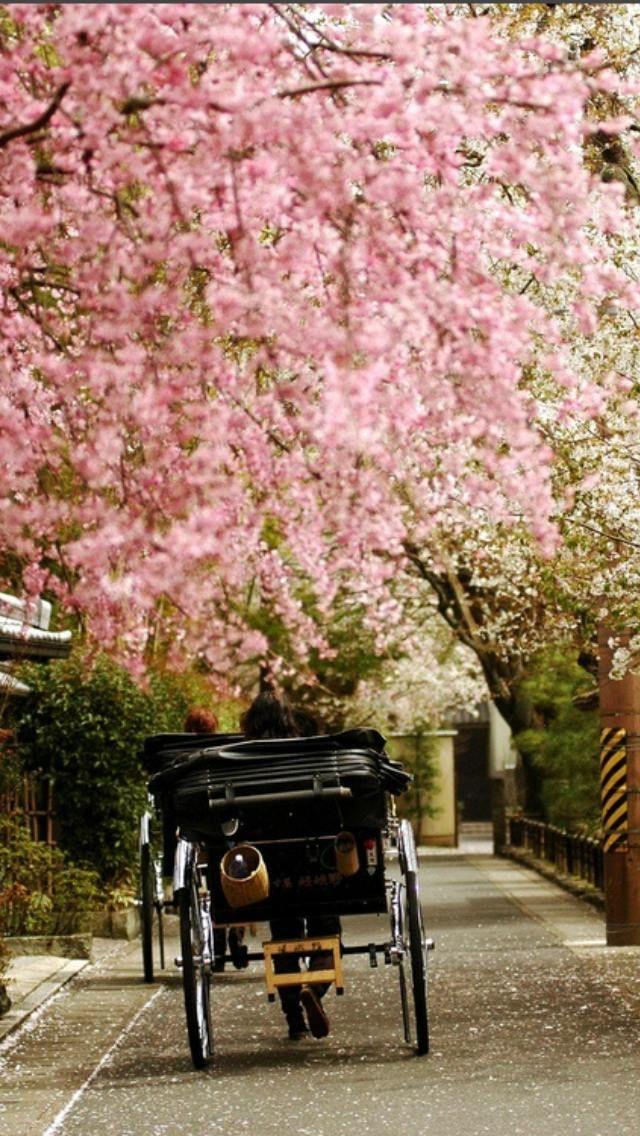 桜吹雪の画像。桜の中を人力車で旅する。