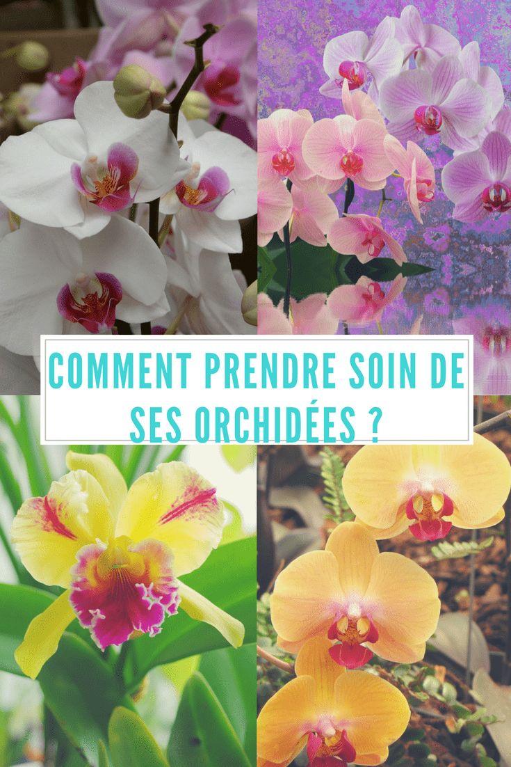 Plus de 25 idées tendance dans la catégorie Jardin des orchidées ...