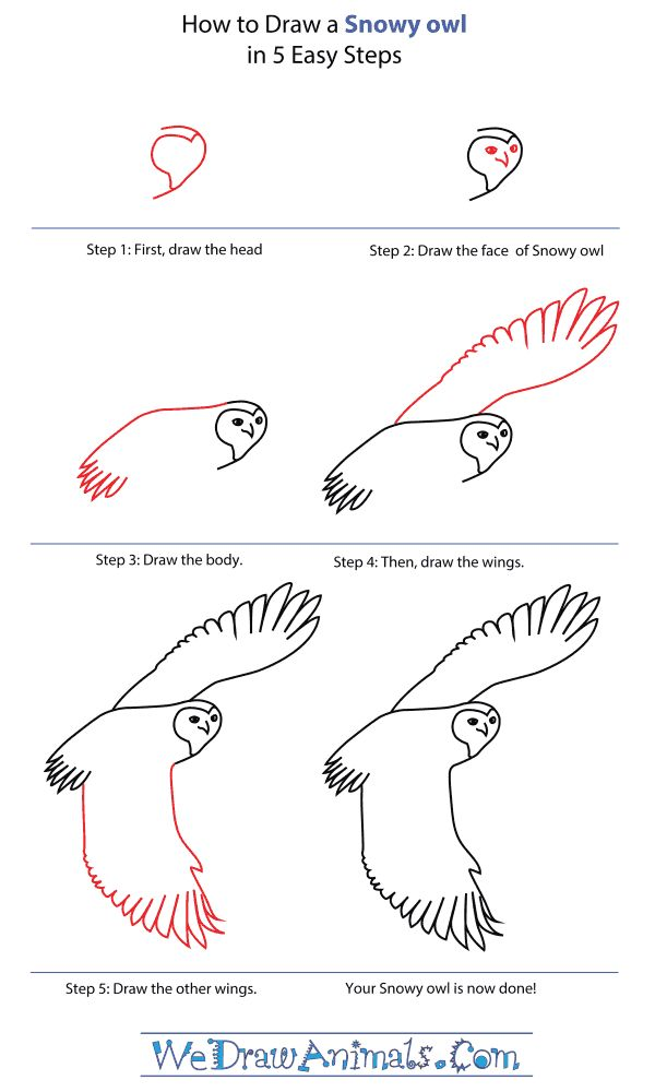 Lots of step by step drawing for kids for Steps to draw an owl