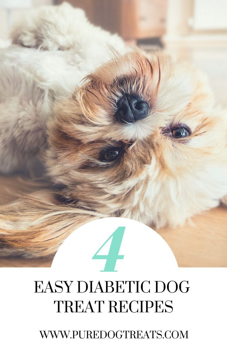 Diabetic Dog Treats: 4 Easy, Safe Homemade Recipes for that very special dog in your life. There's no need for your dog to miss out on tasty treats.