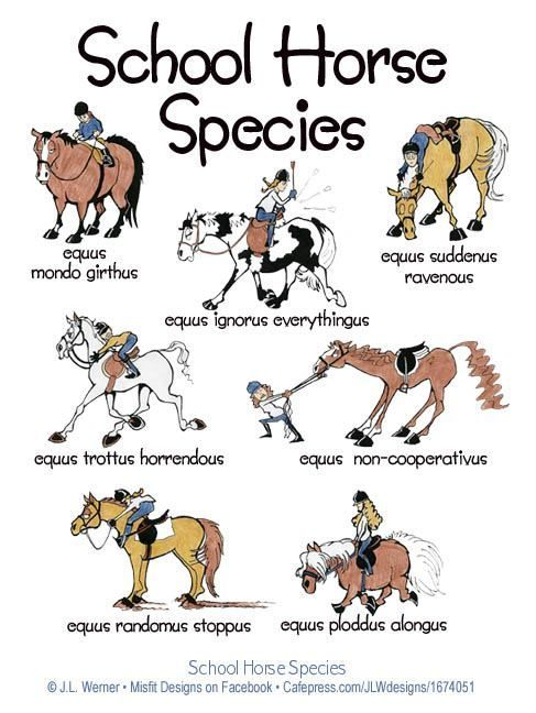 #horsehumour. Which type is yours? www.horsedeals.co.uk
