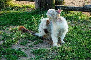 Tipp Haustierbedarf: Zecken- und Flohschutz für Hunde und Katzen