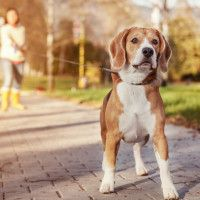 The Secret To Keeping Your Dog From Pulling On The Leash