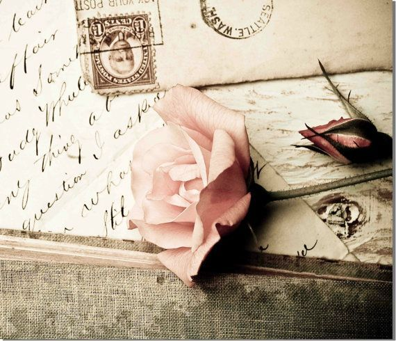 Vintage ROSE Nature Photography Vintage Nostalgia Victorian Romance Shabby Chic Flower Photo Rustic Cottage Decor via Etsy