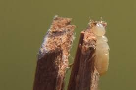 If you are Looking for termites control then safe pest control can help you get rid of termites.