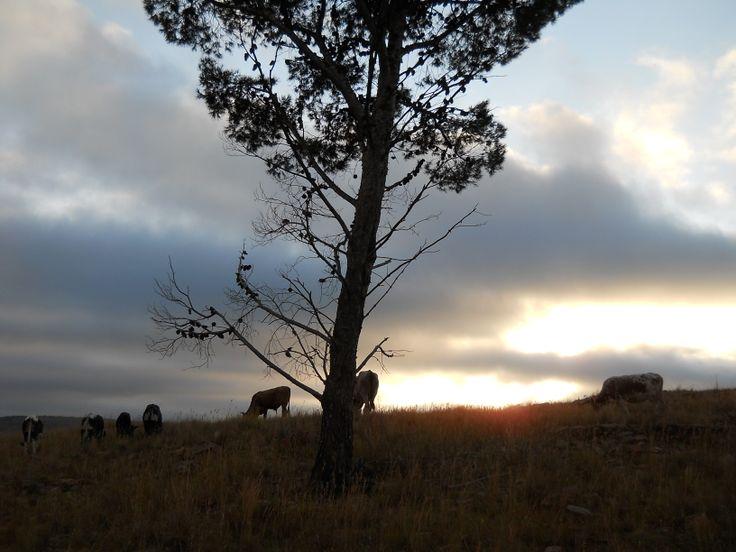 Autumn sunrise with Ngunis.  Photo by Sherrol Swallow
