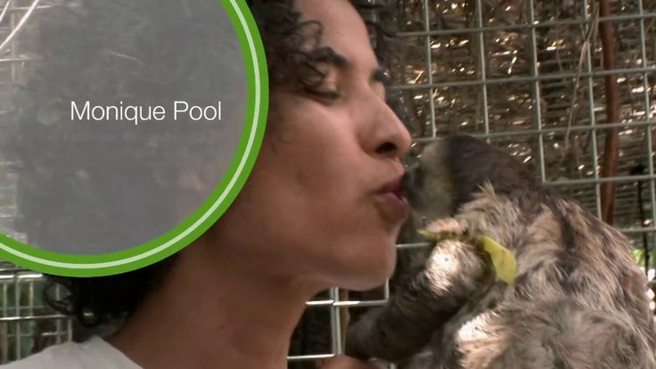"""Monique Pool: Sloth Rescuer / Park Advocate. Monique Pool, CI partner and founder of the Green Heritage Fund Suriname, finds herself """"slothi..."""